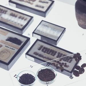 Spotkania z archeologią. Archeobotanika - blaski i cienie