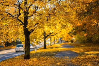 Jesien więcej niebezpieczeństw na drogach niesie...
