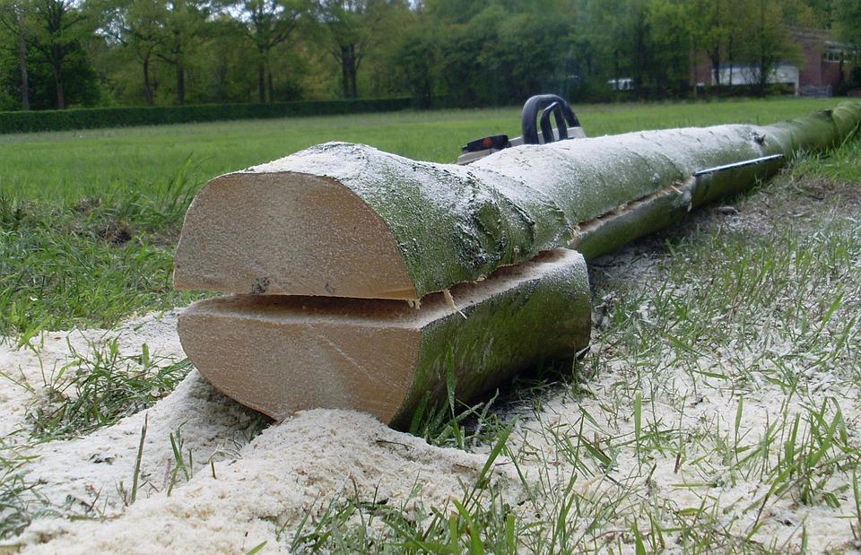 Katowice wytną 20 drzew na Wełnowcu