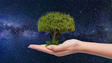 Rekordowa liczba zgłoszeń w aplikacji wCOP drzewo