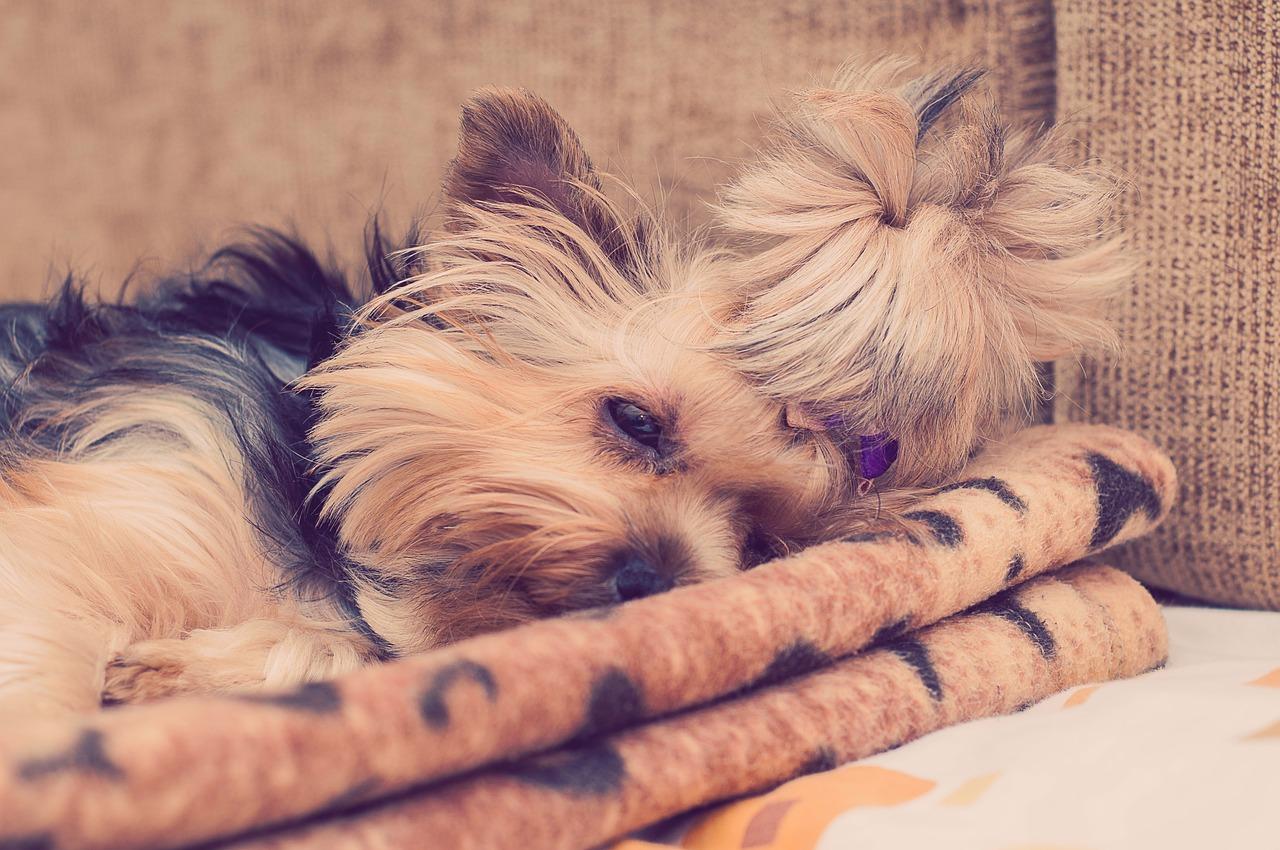 Jak dobrać legowisko dla psa i gdzie je umieścić, by psiak chętnie w nim spał?